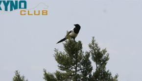 μεγάλο πουλί στον κόσμο